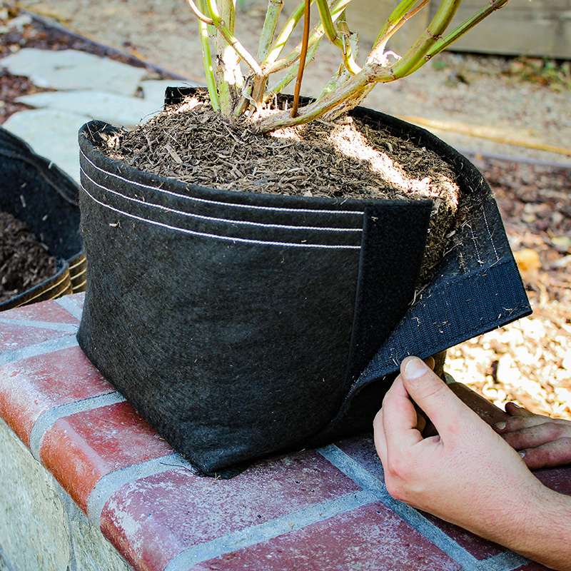 5 gallon transplant-inator fabric pot with sage