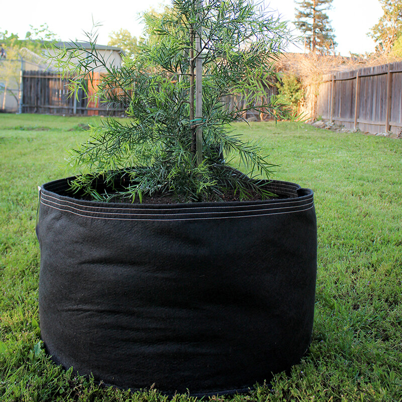 65 gallon classic grassroots fabric pot