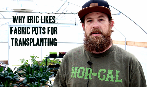 Why use fabric pots for transplanting?