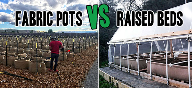 Fabric pots vs raised beds.