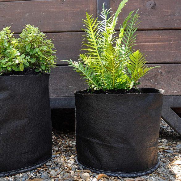 fern in classic grassroots fabric pot