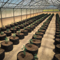large greenhouse of grassroots fabric pots