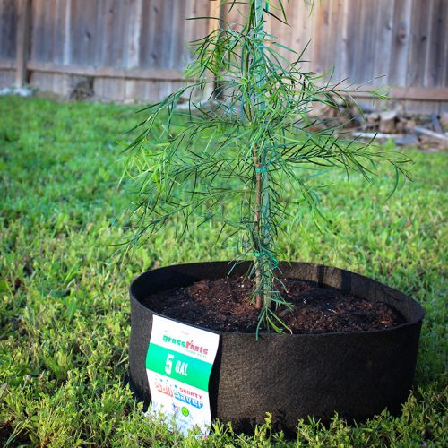 shorty soil saver 5 gallon backyard pic