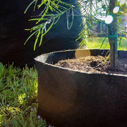 small soil saving fabric pot in the sun